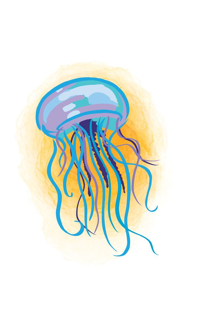 jellyfish stings - caymanhealth